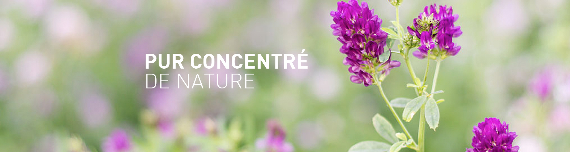 pur_concentre_nature